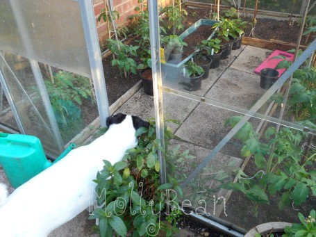 Dog Checking Greenhouse